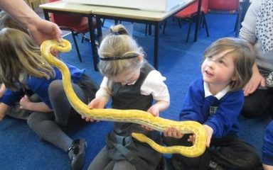 """Jays Animal Encounters"" visit the Reception Class"